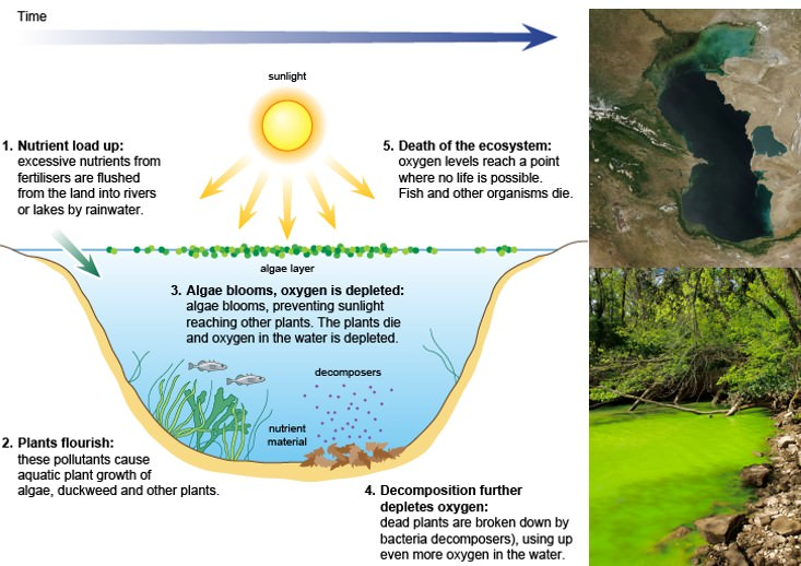 Eutrophication-–-Algal-Bloom