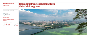https://www.theguardian.com/environment/2018/aug/31/eutrophication-algae-how-animal-waste-is-turning-chinas-lakes-green